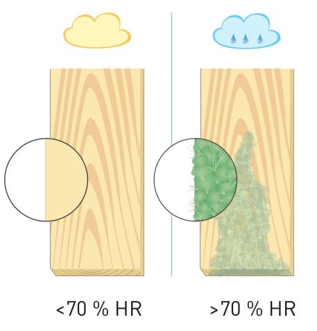 Schéma moisissure industrielle